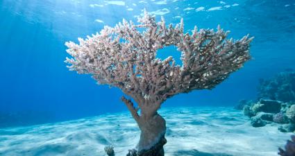 ras mohamed underwater