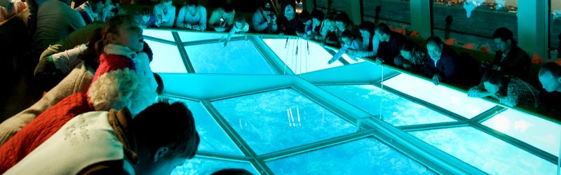 Paseo en Barco de Cristal